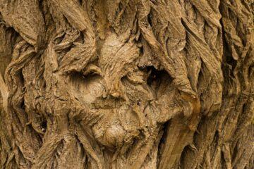 Bist du ein «Holz-Kopf»?